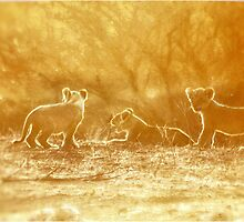 "THE ""THREE"" LITTLE LION CUBS, a Last light capture - THE LION – Panthera leo by Magaret Meintjes"