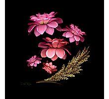 Pink Dahlias Photographic Print
