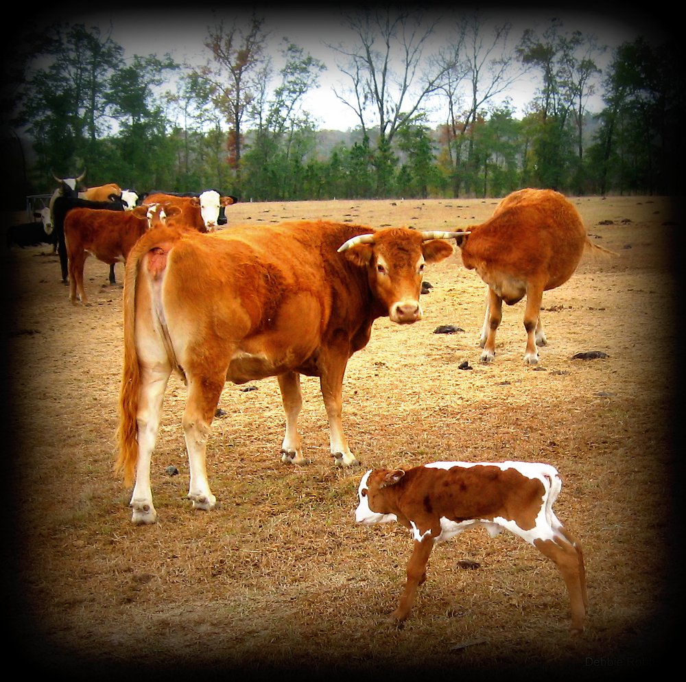 Baby Calf Up On Her Feet... Yeah! by Debbie Robbins