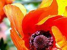 Anemone Swirl by Antionette