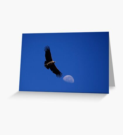 Flight of the  Condor Greeting Card