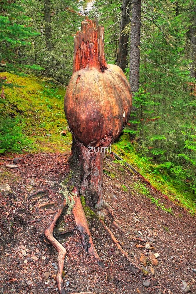 A tree trunk by zumi