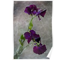 My Sweet Pea Poster