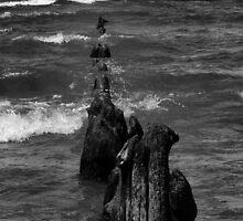 Oval Beach by Carrie Bonham