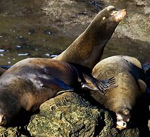 Nap Time by Randall Ingalls
