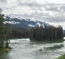 Island in the stream by Sandra Johnston