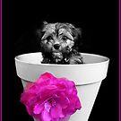 Pot Plant Puppy by JCMPhotos