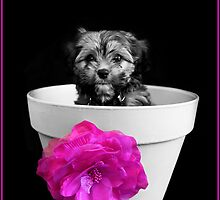 Pot Plant Puppy by JCMPhotos