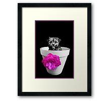 Pot Plant Puppy Framed Print