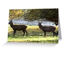 Young Bucks - Red Deer Greeting Card