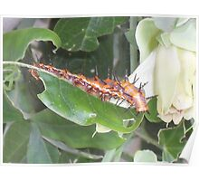 Caterpillar on Passion Flower Poster