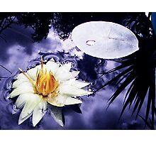 Moonlit Lily Photographic Print