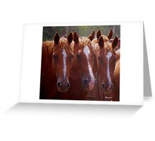 Three of a kind.. Greeting Card