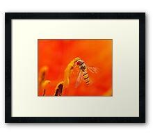 like red fire (for challenge now) Framed Print