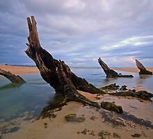 Four Stumps by joel Durbridge
