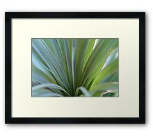 Ponytail plant caught in the breeze Framed Print