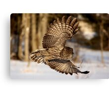 """I hope he didn't forget my luggage"" - Great Grey Owl Canvas Print"
