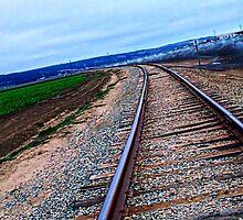 Tracks  by Renee D. Miranda