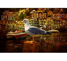 Bird at Looe Photographic Print