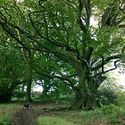 Old man of Raincliffe Woods by Merice  Ewart-Marshall - LFA