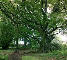 Old man of Raincliffe Woods by Merice  Ewart - LFA