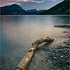 Driftwood by Philippe Albanel
