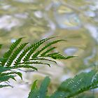 Speed River Fern by Zkat