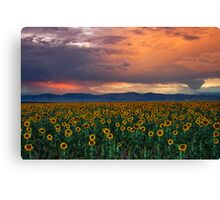 God's Sunflower Sky Canvas Print