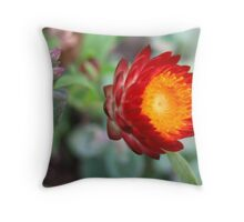Caught in a red headlight Throw Pillow