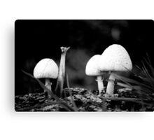 Fungi - Mixenden, Halifax, UK Canvas Print