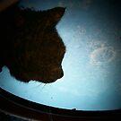 Moon Cat by Victoria McGuire
