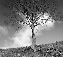 Lonesome tree - Mixenden, Halifax, UK by Andy Beattie