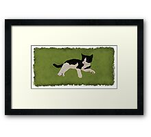 Zorro Kitten - Green Framed Print