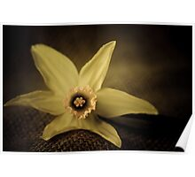 vintage Daffodil Poster