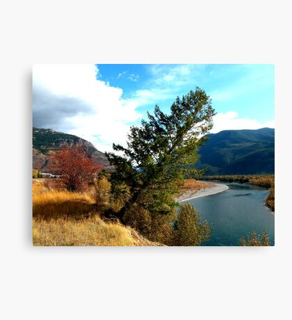 The leaning tree .  Canvas Print