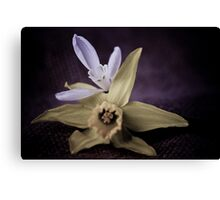 Daffodil and Snowdrop Canvas Print