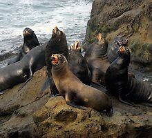Sea Lion Chorus by Randall Ingalls