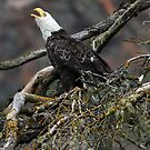 Eagle Alarm Cry, China Poot Bay by A.M. Ruttle