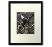 Eagle Alarm Cry, China Poot Bay Framed Print