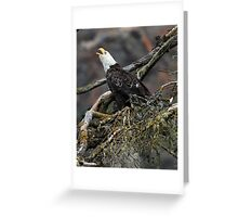 Eagle Alarm Cry, China Poot Bay Greeting Card