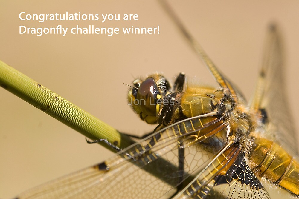 Dragonfly challenge banner by Jon Lees