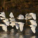 The Sunset Flock by byronbackyard