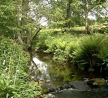 Hebble brook - Mixenden, Halifax, UK by Andy Beattie