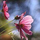 Floral Dream by heatherfriedman