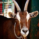 Billy the Goat - Gilcrease Nature Sanctuary by Tara Wagner