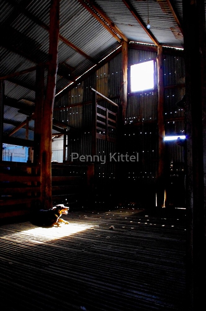 The Poolamacca Shed by Penny Kittel
