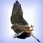 Flight Of The Kestrel / None Captive by snapdecisions