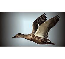 Flight Of The Mallard Photographic Print
