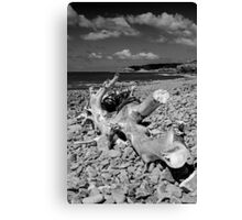 Washed up Tree Canvas Print