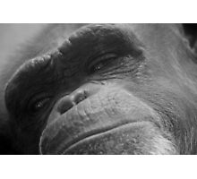 Primate In Thought Photographic Print